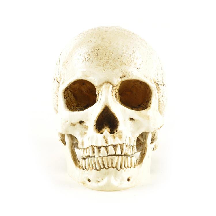 Hot Sale Personalized Handmade Polyresin Human Skull Head